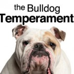 bull-dog-temperament