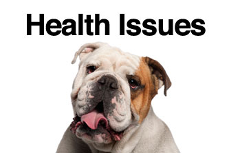 bulldog health issues english bulldog health bulliepupsrus com 986
