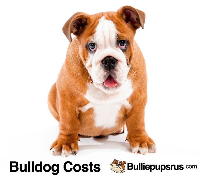 bulldog-costs