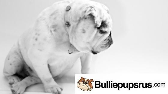 Bulldogs and Children
